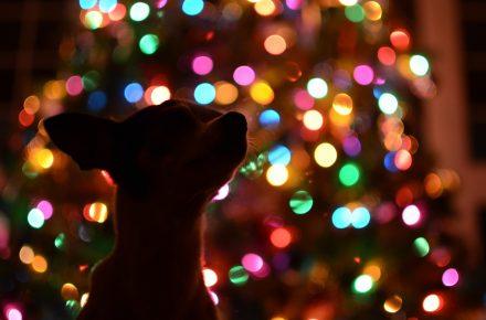 hond en kerst