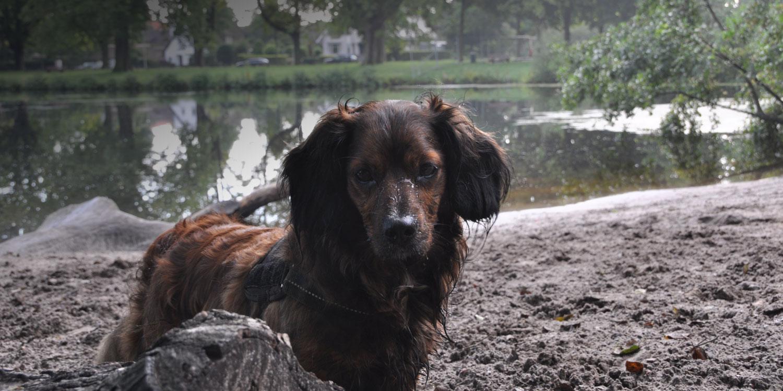 tweede-kans-hond-2