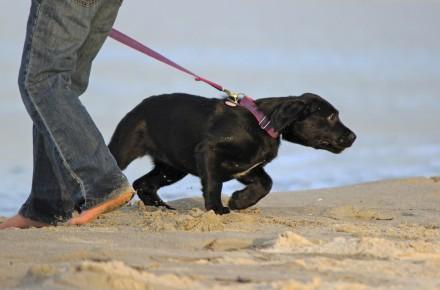 effect halsband op hond
