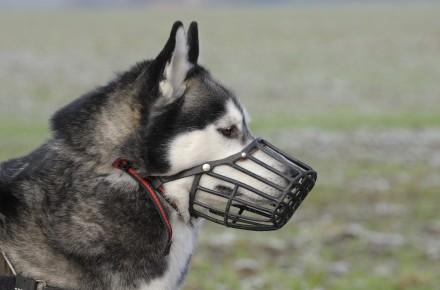 hond en muilkorf