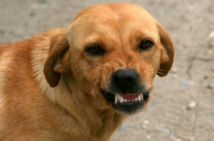 straf hond grommen