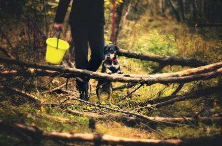persoonlijke grenzen hond