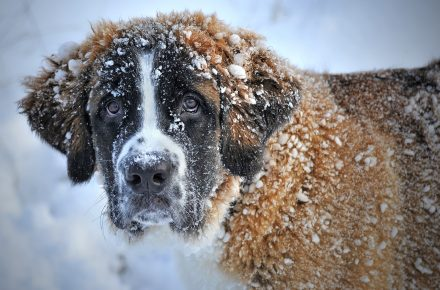 hond en winter