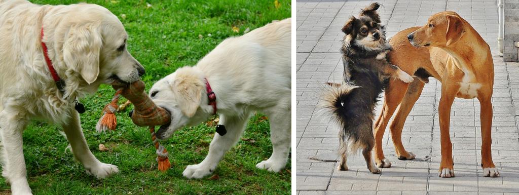 gedrag begeleiding hond